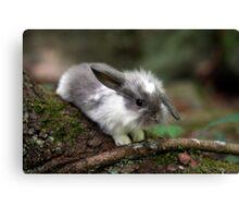 Cute lop ear baby bunny Canvas Print