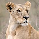 Lioness iPhone cover by Brad Francis