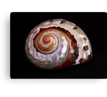 Sea Shell on Black Canvas Print