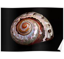 Sea Shell on Black Poster