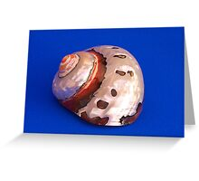 Sea Shell on Blue Greeting Card