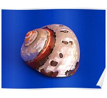 Sea Shell on Blue Poster
