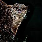 Otter  by Vein