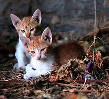 Little  Tigers of Crete  by larry flewers