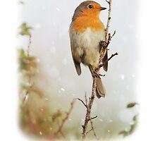 Robin in Snow Christmas Card by Nigel Tinlin