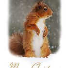 Squirrel Wildlife Christmas Card by Nigel Tinlin