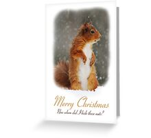 Squirrel Wildlife Christmas Card Greeting Card
