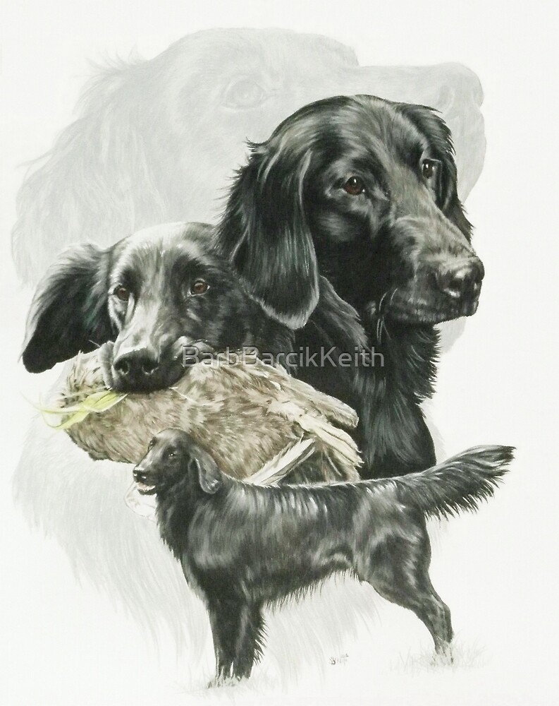 Flat-coated Retriever /Ghost by BarbBarcikKeith