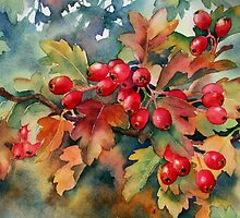 Hawthorn berries by Ann Mortimer