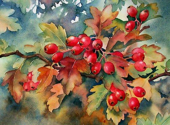 Hawthorn berries by Ann Mortimer