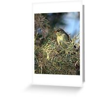 Willow warbler (Phylloscopus trochilus) Greeting Card