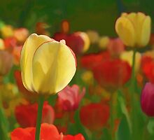 Tulips Bouquet by Aase