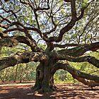 The Angel Oak by Christine Annas