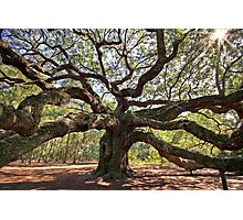 The Angel Oak Photographic Print