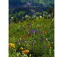 Wildflower Meadows Above Lake Irwin Photographic Print