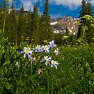 Colorado Blue Columbine And Peeler Peak by CrowningGlory