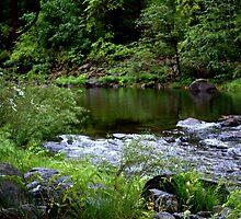 """Along The River"" by Lynn Bawden"