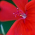 Another flower ... by jean-jean