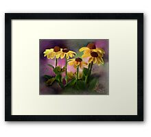 Black-eyed Susan Flower Blossoms Framed Print