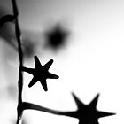 Tinsel Stars by timkirman