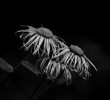 Untitled by mudd-photo
