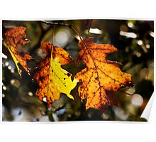 Oak Colors 0010 Poster