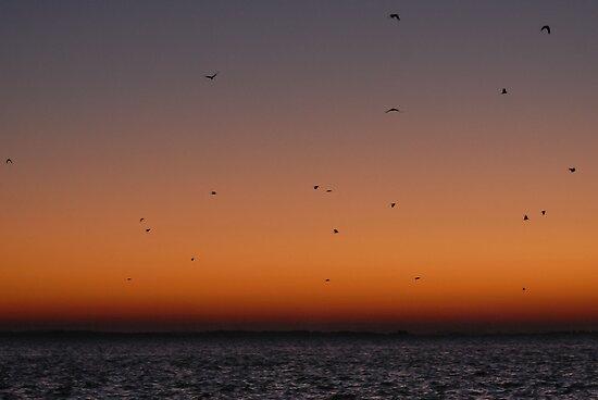 Lagoon in sunrise by Antanas