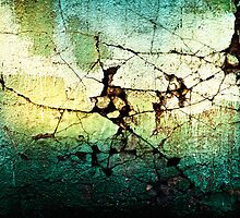 Cracks in a wall, Bird by Tim McGuire