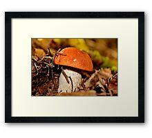 Rusty Cap Framed Print