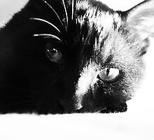 Thomas, my adoring cat. (2) by Mudgers