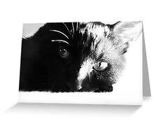 Thomas, my adoring cat. (2) Greeting Card