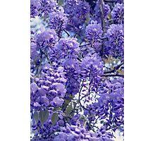 Wistful, Wishful, Ephemeral in Blue Photographic Print