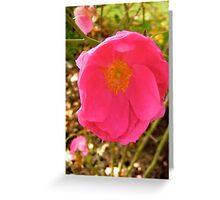 Governor General's rose 14 Greeting Card