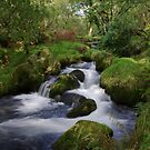 Dartmoor Stream by sbarnesphotos