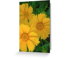Yellow Coreopsis  Greeting Card