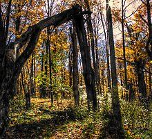 HDR Forest by CapturedLIght