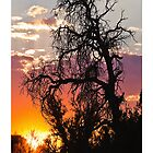 Sunrise over through a dead tree by Tim McGuire