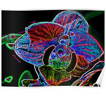 Manipulated Orchid Poster