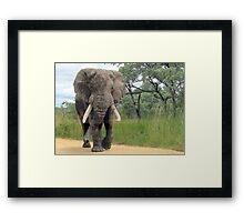 The ELEPHANT (Loxodonta Africana) Framed Print