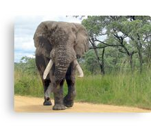 The ELEPHANT (Loxodonta Africana) Canvas Print