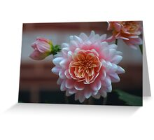 Soft Pink Dahlia Flower Greeting Card