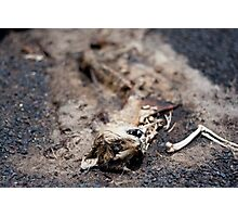 Splat Kat Photographic Print
