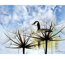 Goose Poem Photographic Print