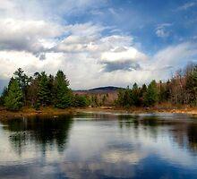 Pillsbury State Park by Monica M. Scanlan