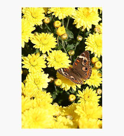 Bright Autumn - Common Buckeye 4 Photographic Print
