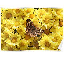 Bright Autumn - Common Buckeye 3 Poster