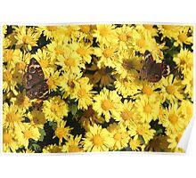 Bright Autumn - Common Buckeye 2 Poster