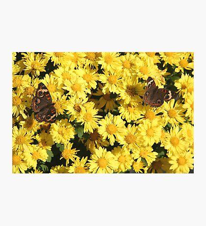 Bright Autumn - Common Buckeye 2 Photographic Print
