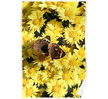 Bright Autumn - Common Buckeye 1 Poster