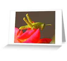 Young Hopper Greeting Card
